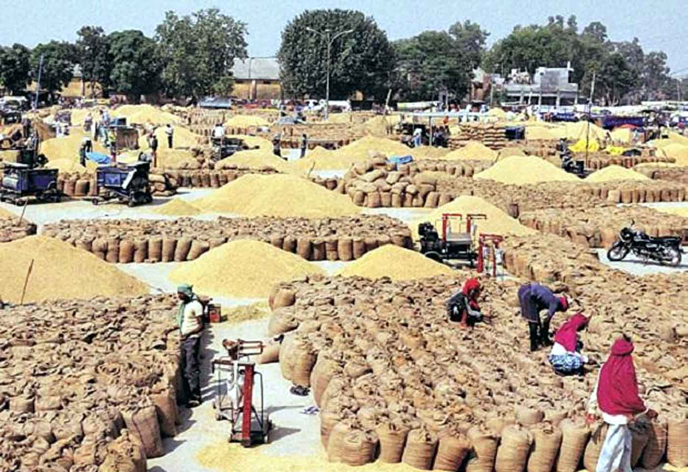 Central Govt procures 258.74 lakh tonnes wheat at MSP for Rs 51,100 cr