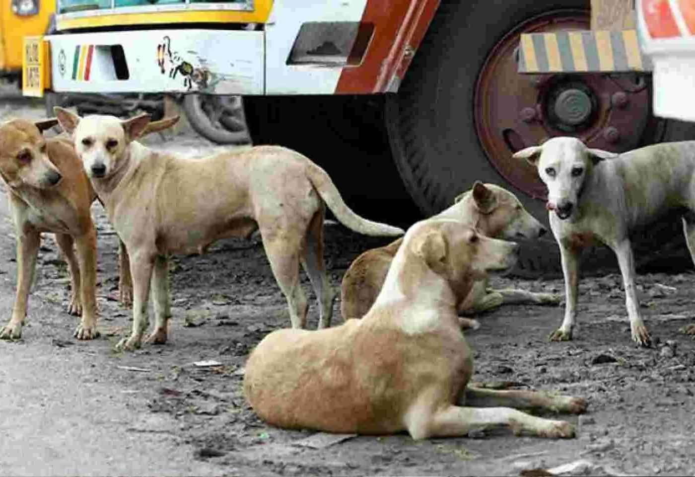 150 dogs burried alive in shivamogga karnataka Reports